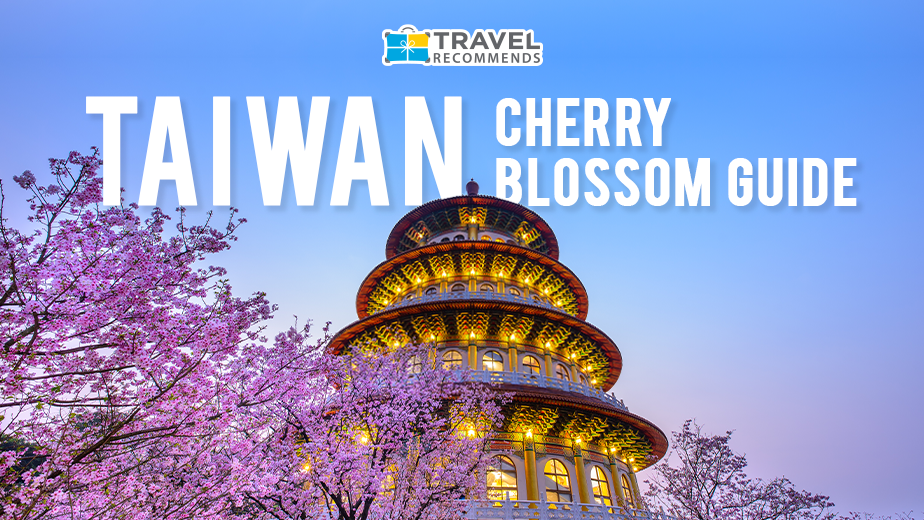 Taiwan Cherry Blossom Guide 2020