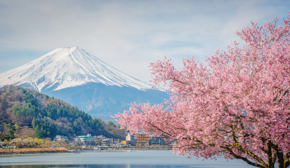 Fuji Five Lakes Cherry Blossoms