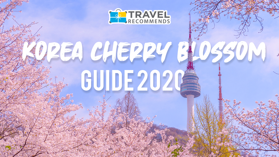 Korea Cherry Blossom Guide 2020 Travel Recommends